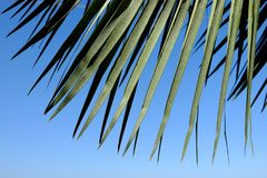 Arch of palm leaves Royalty Free Stock Photos