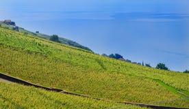 Blue Leman lake and vineyard. Switzerland, Lavaux village, lake Leman, vineyard and beautiful blue lake Stock Image