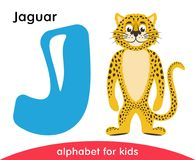 Blue letter J and yellow Jaguar. English alphabet with animals. Cartoon characters isolated on white background. Flat design. Zoo theme. Colorful vector Royalty Free Illustration