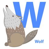 Blue Letter W Sitting and Howling Wolf ABC Cards. Blue letter W, sitting and howling wolf abc cards. Vector illustration isolated on white background. English Royalty Free Stock Photos