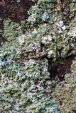 Blue lichen on stone, macro Royalty Free Stock Photography