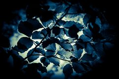 Blue light. Through the leaves Royalty Free Stock Image