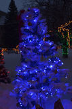 Blue lights on Christmas tree outdoors in snow. Multicolor lights in background Royalty Free Stock Photography
