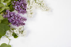 The Blue lilac on a wooden white table Stock Image