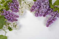 The Blue lilac on a wooden white table Stock Photography