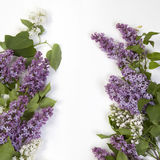 The Blue lilac on a wooden white table Stock Photo