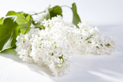 The Blue lilac on a wooden white table Stock Images