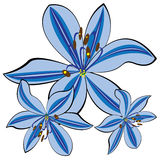 Blue lily isolated on white royalty free illustration