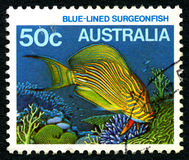 Blue Lined Surgeonfish Australia Postage Stamp. AUSTRALIA - CIRCA 1984: A used postage stamp from Australia, depicting an image of a Blue Lined Surgeonfish Royalty Free Stock Photos