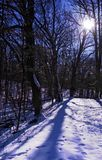 Blue Lit Winter Trail Royalty Free Stock Photo