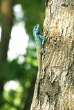 Blue lizards are climbing on trees. stock photos