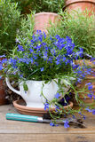 Blue Lobelia and a Fork Royalty Free Stock Photo