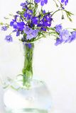 Blue lobelias in the glass vase Stock Photos