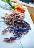 Blue lobster. Fresh blue and regular lobster from Normandy Stock Photos