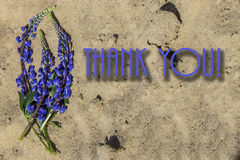 Blue long flowers on the sand, Royalty Free Stock Image