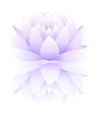 Blue lotus. Vector illustration of blue lotus and outlined lotos isolated on white background