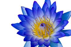 Free Blue Lotus Stock Images - 27219504
