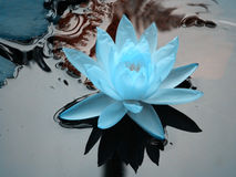Blue lotus Royalty Free Stock Photography