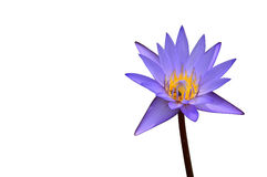 Blue lotus isolate on white Stock Photography