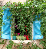 Blue Louvre with Creeping Vines. Royalty Free Stock Image