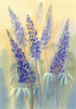 Blue lupine watercolor royalty free illustration