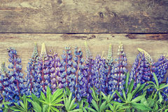 Blue lupines on wooden background. Royalty Free Stock Photography