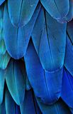 Blue Macaw Feathers. Macro photo of blue macaw feathers Stock Photo