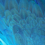 Blue Macaw feathers Stock Image
