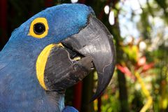 Blue Macaw Parrot Closeup. Closeup head shot of a brilliant blue macaw parrot in a natural setting with blurred foliage in the background Royalty Free Stock Photos
