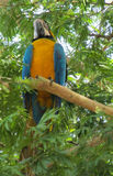 Blue macaw parrot. Tropical colorful bird Royalty Free Stock Photos