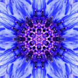Blue Mandala Flower Center. Concentric Kaleidoscope Design. Blue Mandala of Cornflower Flower Center Close-up. Mirrored Concentric Kaleidoscopic Design of the Royalty Free Stock Image