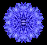 Blue Mandala Flower Kaleidoscope Isolated on Black Royalty Free Stock Image