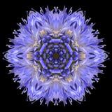 Blue Mandala Flower Kaleidoscope Isolated on Black. Blue Mandala Cornflower Centaurea cyanus Flower. Kaleidoscopic design Isolated on Black Background stock photography