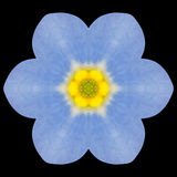 Blue Mandala Flower Kaleidoscope Isolated on Black Royalty Free Stock Photo
