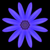 Blue Mandala Flower Kaleidoscope Isolated on Black Stock Image