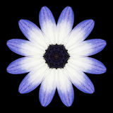 Blue Mandala Flower Kaleidoscope Isolated on Black Royalty Free Stock Images
