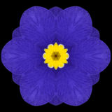 Blue Mandala Flower Kaleidoscope Isolated on Black Stock Photo