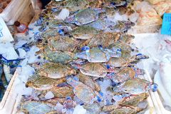 Blue manna crab Royalty Free Stock Image