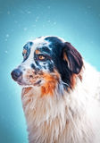 Blue marble Aussie face. Portrait on a blue background Stock Photography