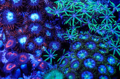 Blue marine life background Stock Images