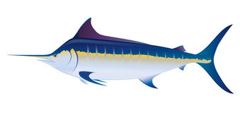 Blue Marlin royalty free illustration