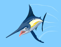 Blue marlin Stock Image