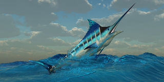Blue Marlin Burst Royalty Free Stock Image