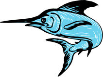 Blue Marlin Fish Jumping Drawing. Drawing sketch style illustration of a blue marlin fish jumping viewed from side set on isolated white background Stock Photos