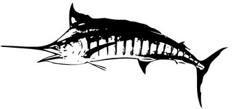 Blue marlin fish - vector. A largest of marlins - caught mostly on trolling either dead bait or artificial lure Royalty Free Stock Photos