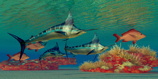 Marlin Reef Stock Photo