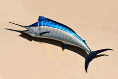 Blue marlin on wall. A blue marlin fish hanging on a wall Royalty Free Stock Photography