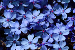 Blue meadow Stock Photo