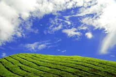 blue meadows sk sunny lit. obraz stock
