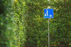 Blue men outdoor toilet sign with green plant wall Royalty Free Stock Images